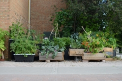Caja street garden box and in stands