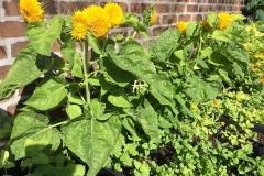chocosol garden 2016