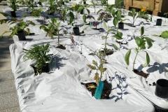 Regent Park Boxes After Planting