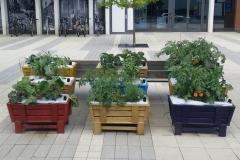 Regent Park Popup Garden June